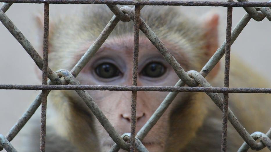 Más de 100 millones de animales en todo el mundo son utilizados para experimentación animal