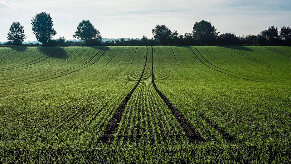 Economía Verde, una iniciativa para salvar el medio ambiente