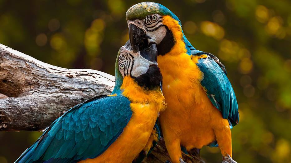 Nos acercamos a la extinción de las aves