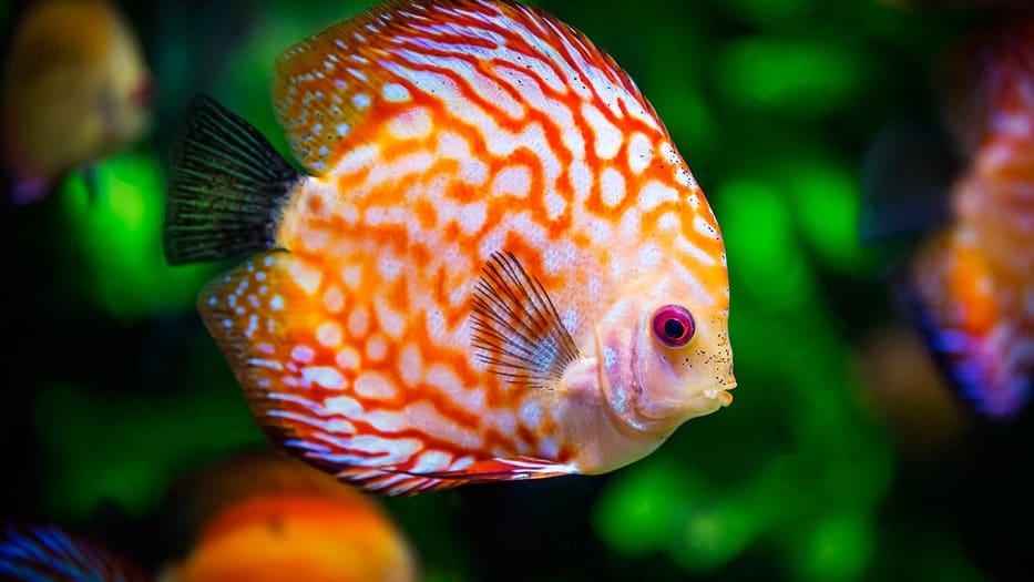 ¿Los peces tienen sentimientos?