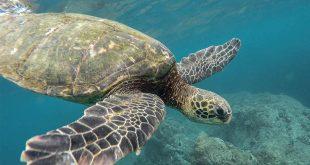 370 compromisos valorados en más de $63 mil millones es el saldo que deja la última Conferencia Nuestro Océano 2019.