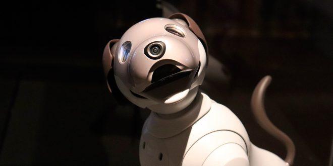El uso de los perros robots se amplía: desde mascotas hasta policías