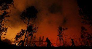 Los incendios forestales en el mundo generan en 2019 un total de CO2 equivalente a 19 veces las emisiones totales de España en un año