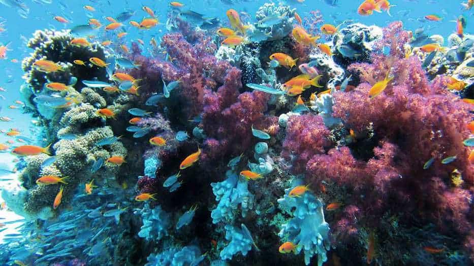 Calentamiento-del-océano