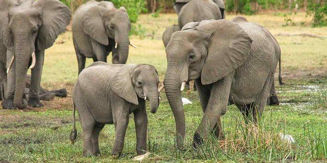 Comercio ilegal de vida silvestre le roba al mundo hasta dos mil millones de dólares