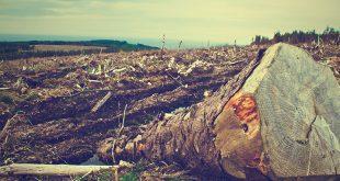 El extractivismo salvaje solo deja a su paso destrucción/Foto referencial/Pixabay