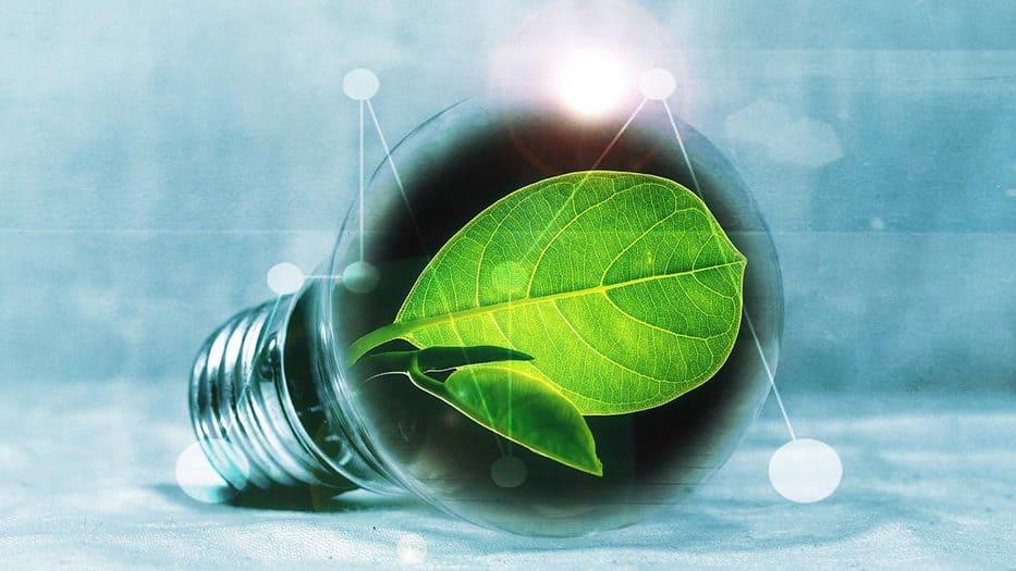 Energía renovable biodiversidad