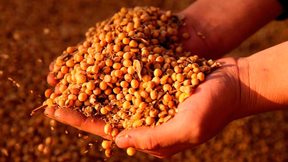 La soya es uno de los principales productos de exportación de EEUU a China
