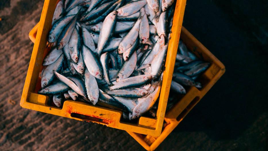 Las cuotas de pesca acordadas se mantendrán vigentes durante todo el 2020