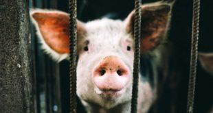 Mejorar el bienestar animal