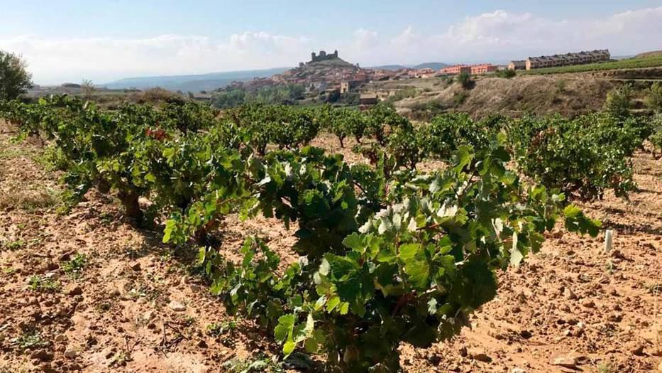 Adentrarse en el mundo vitivinícola 3