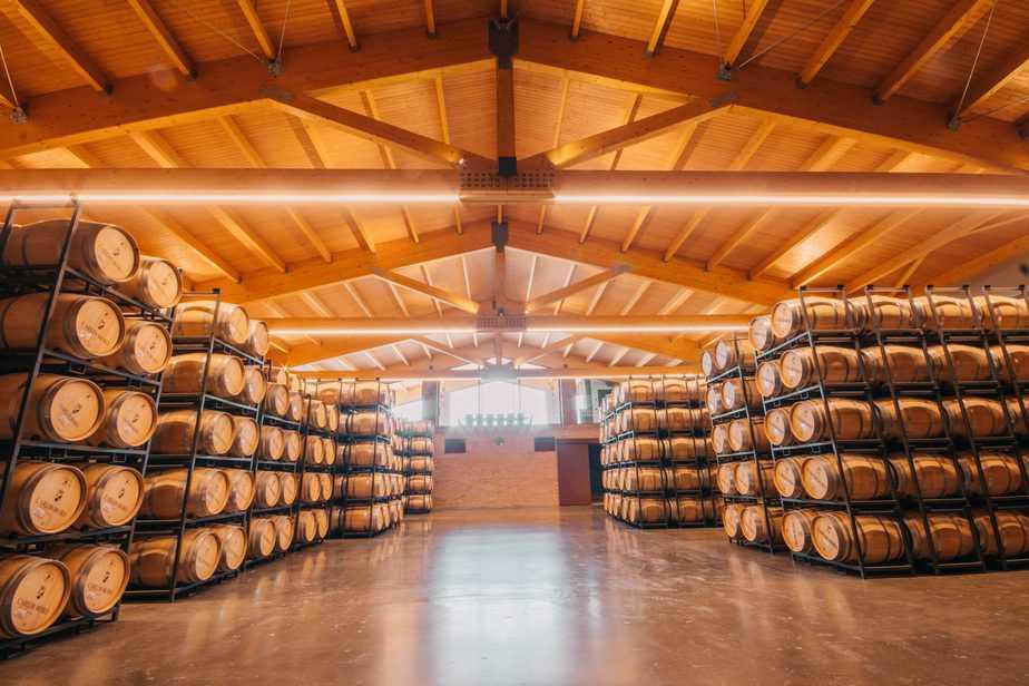 Adentrarse en el mundo vitivinícola 5