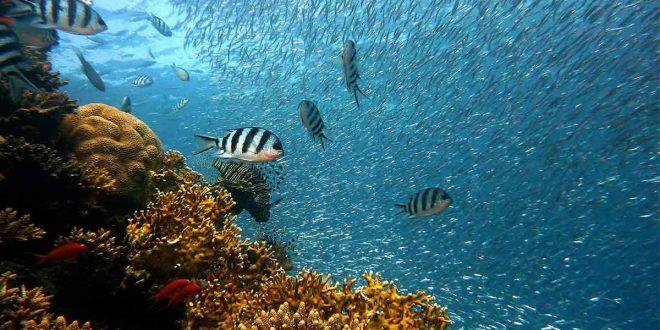 Un manifiesto para restaurar los mares y océanos del mundo