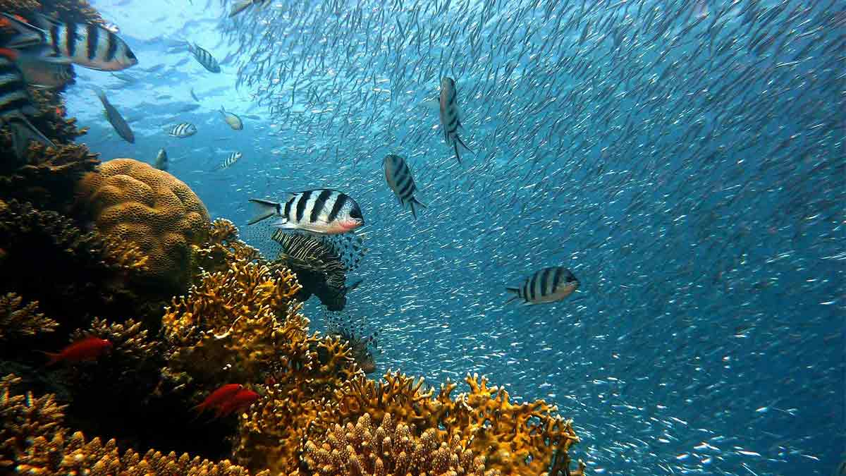 Mares-y-océanos