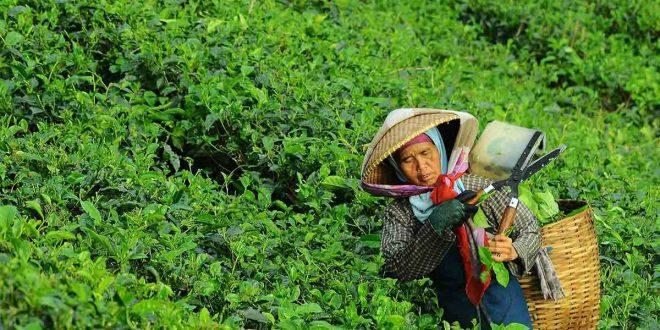 La sostenibilidad medioambiental no adversa la producción de alimentos