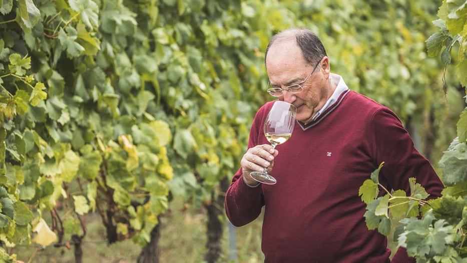 Carlos Moro,Adentrarse en el mundo vitivinícola