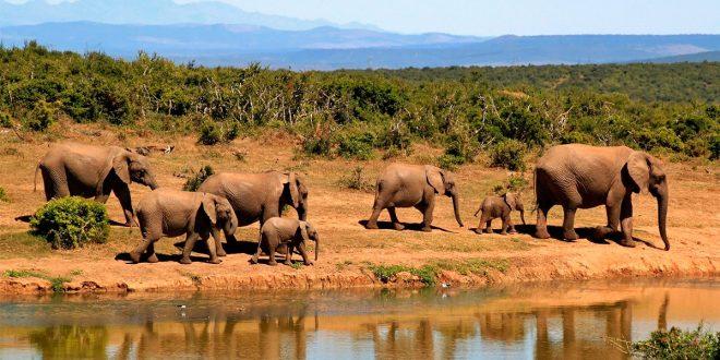 Comercio ilegal de vida silvestre, un negocio de al menos 20 mil millones al año