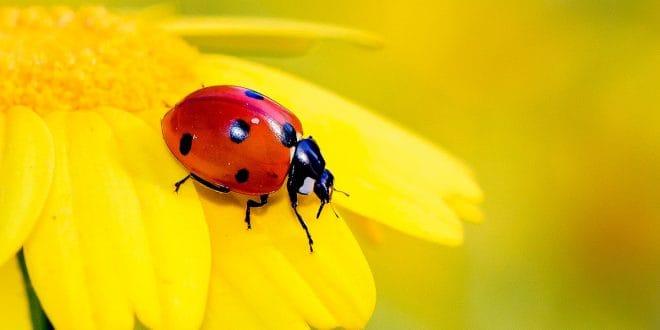 10% de la población de insectos se encuentra bajo amenaza