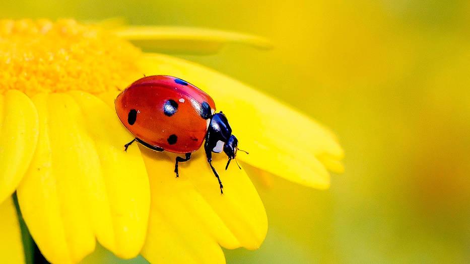 Población de insectos