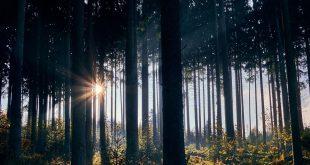 Los bosques del mundo están en peligro y queda una década para actuar