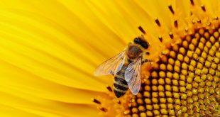 Las abejas son capaces