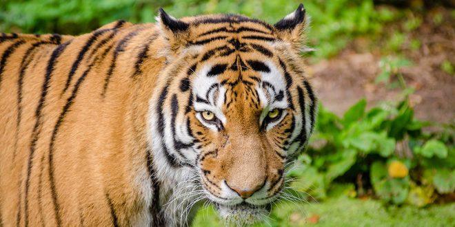 10 especies migratorias en peligro tendrán protección internacional