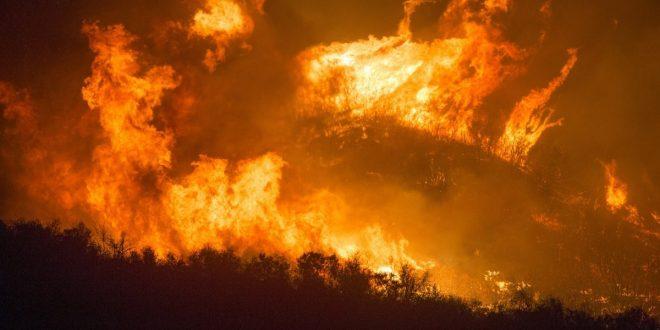 La babosa rosada sobrevivió a los incendios en Australia