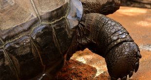La tortuga más grande del planeta