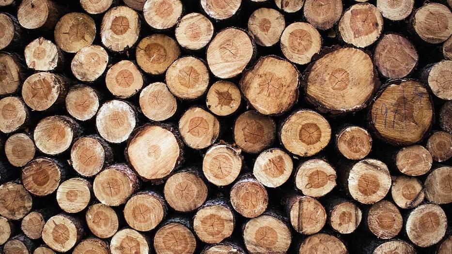Brasil exportó madera