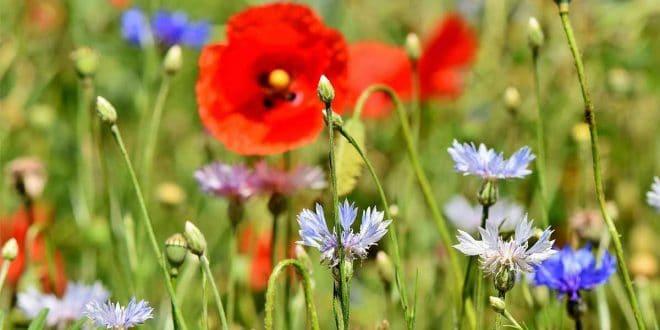 Prados-de-flores-silvestres_1