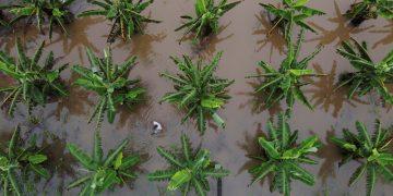 #C16Alerta: Medioambiente y biodiversidad