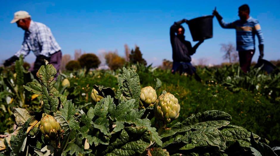 La falta de personal para recolectar las frutas y hortalizas ocasionaría un descenso en la producción / TW: @La_COAG