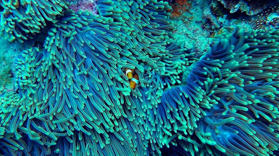Por el aumento de la temperatura, el cambio climático ha afectado a los corales en distintas regiones / Pixabay