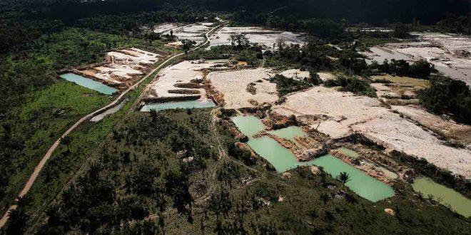 La destrucción de la naturaleza aumenta la amenaza de pandemias