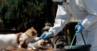 animales domésticos no transmiten el COVID-19