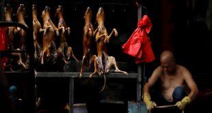 Venta de perros en un mercado durante el festival de Yulin, China