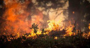 incendios forestales en Venezuela