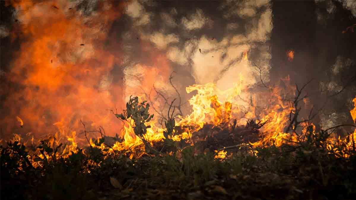 Cadena de incendios forestales en Venezuela y Colombia