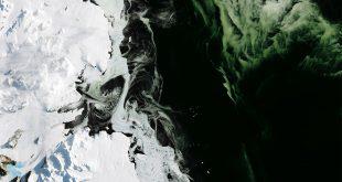 La Antártida se tiñe de verde por el cambio climático