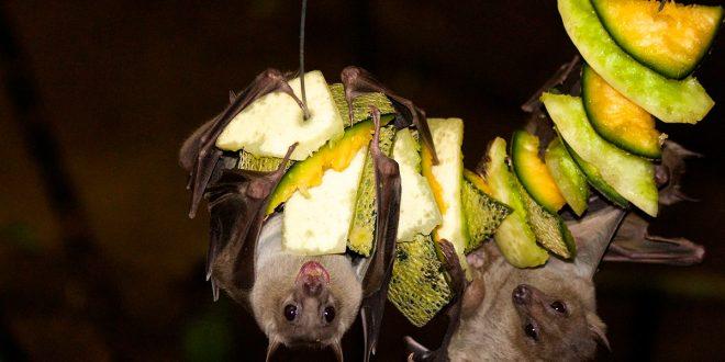 Prohíben consumo de animales salvajes en Wuhan