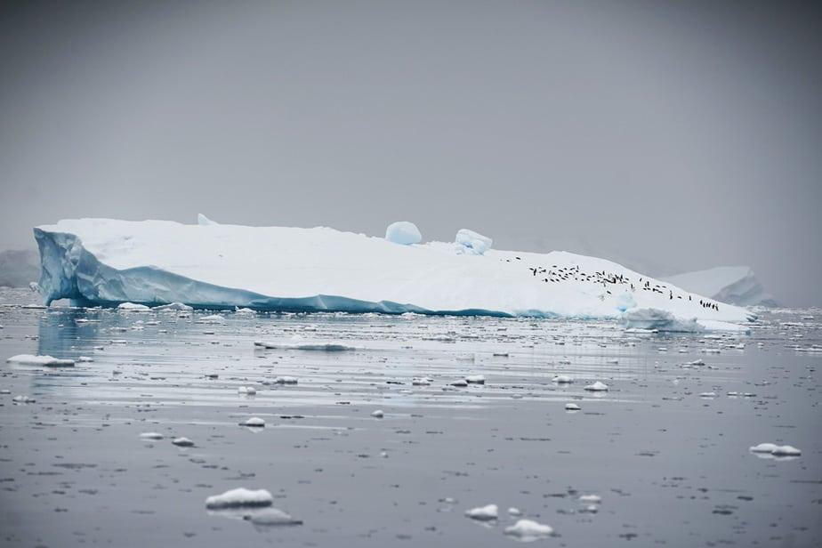 Hielo marino antártico
