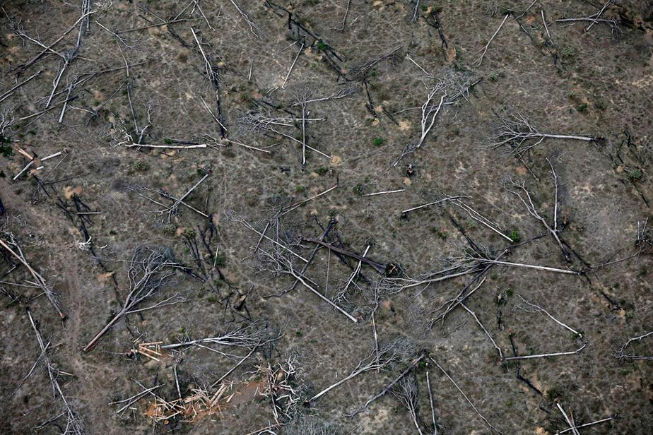 Bosques disminuyen en edad y estatura