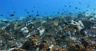 océanos covid-19