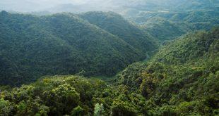 COVER-WEB-sting-mana-aterciopelados-y-carlos-vives-levantaron-su-voz-por-las-selvas-tropicales