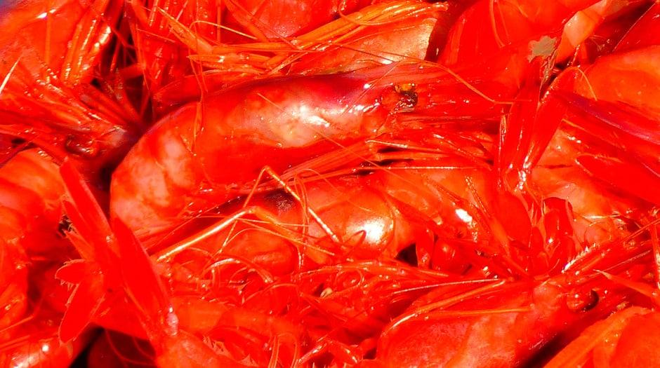La quitina se encuentra en el exoesqueleto de los crustáceos e insectos / Pixabay