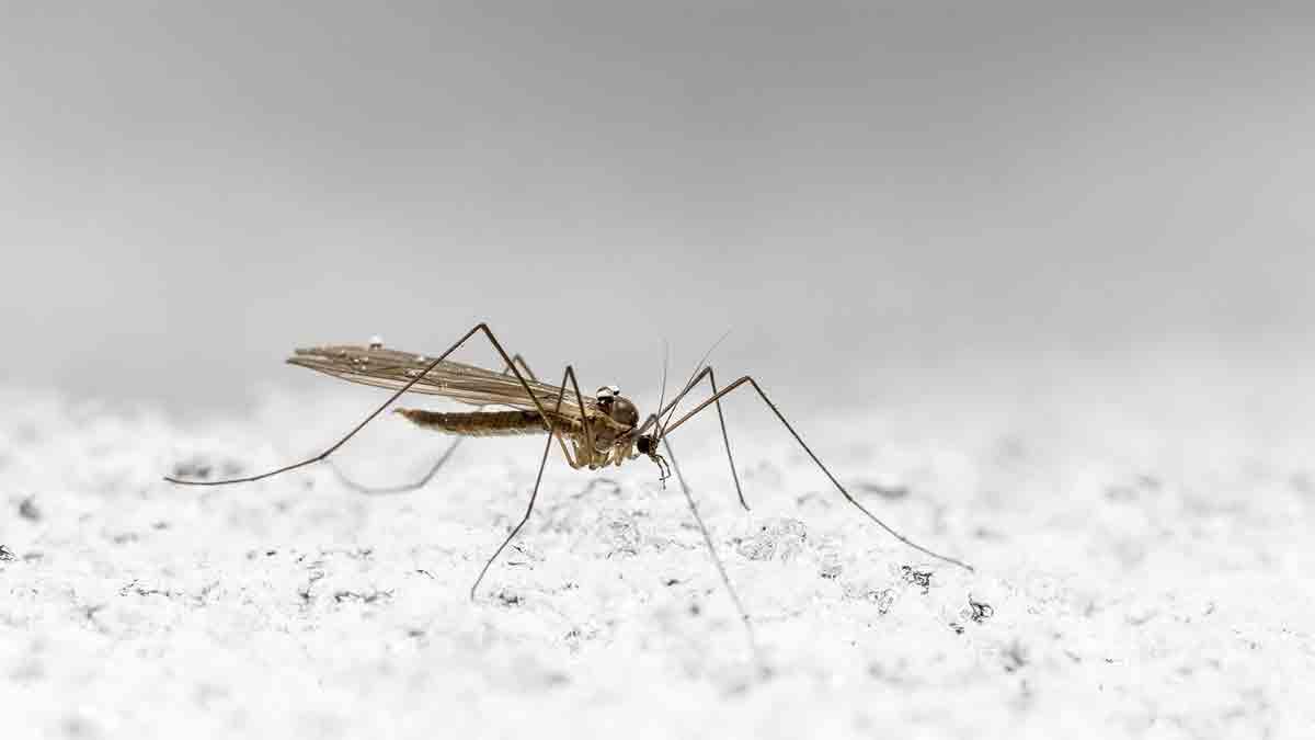 Proteínas-de-la-saliva-de-mosquito_2