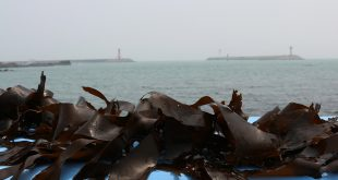 algas invasoras pesca de atún
