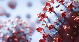 cover web-secuencia-genetica-completa-del-sars-cov-2