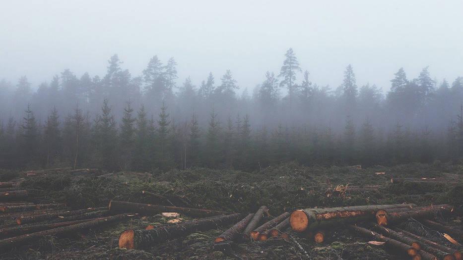 américa latina deforestación