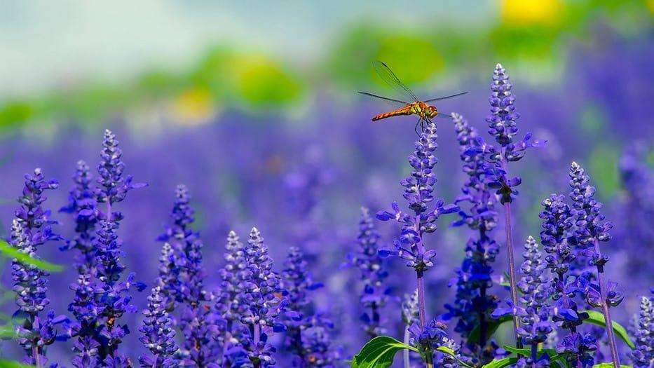 Insectos en riesgo de extinción